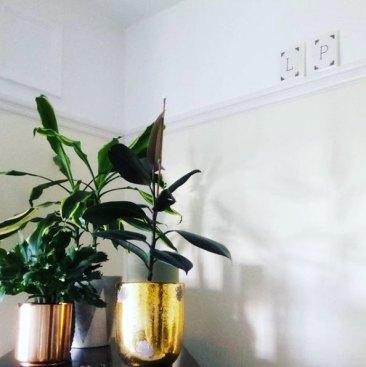 houseplants:interiors post 7