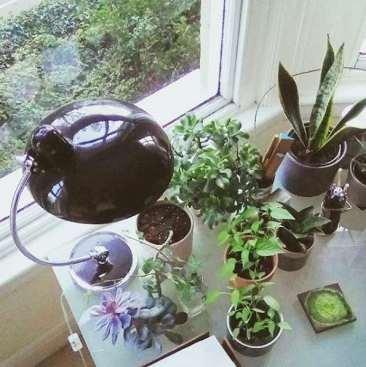 houseplants:interiors post 8