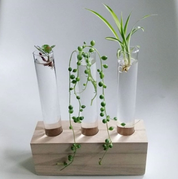 spider plant post 2
