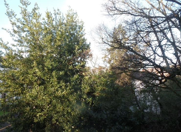 on trees and morning light