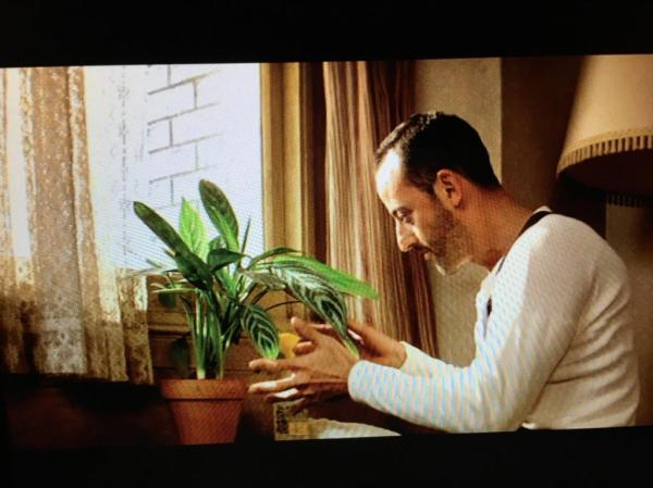 Aglaonema Care Guide Ag Leon Ema The Plant From One Of My Favourite Films Houseplanthouse