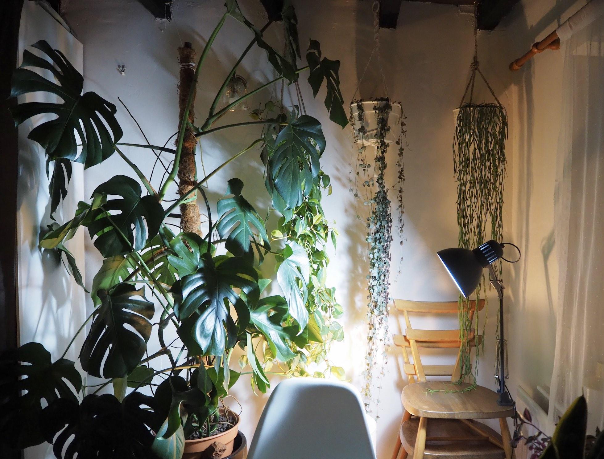 Grow Lights For Happy Houseplants Houseplanthouse