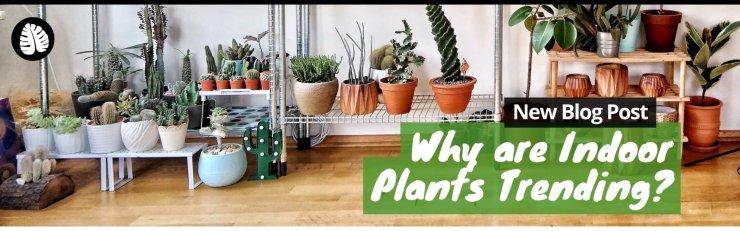 plantify1
