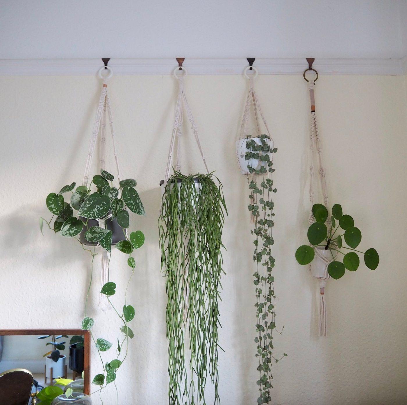 hanging sunshine