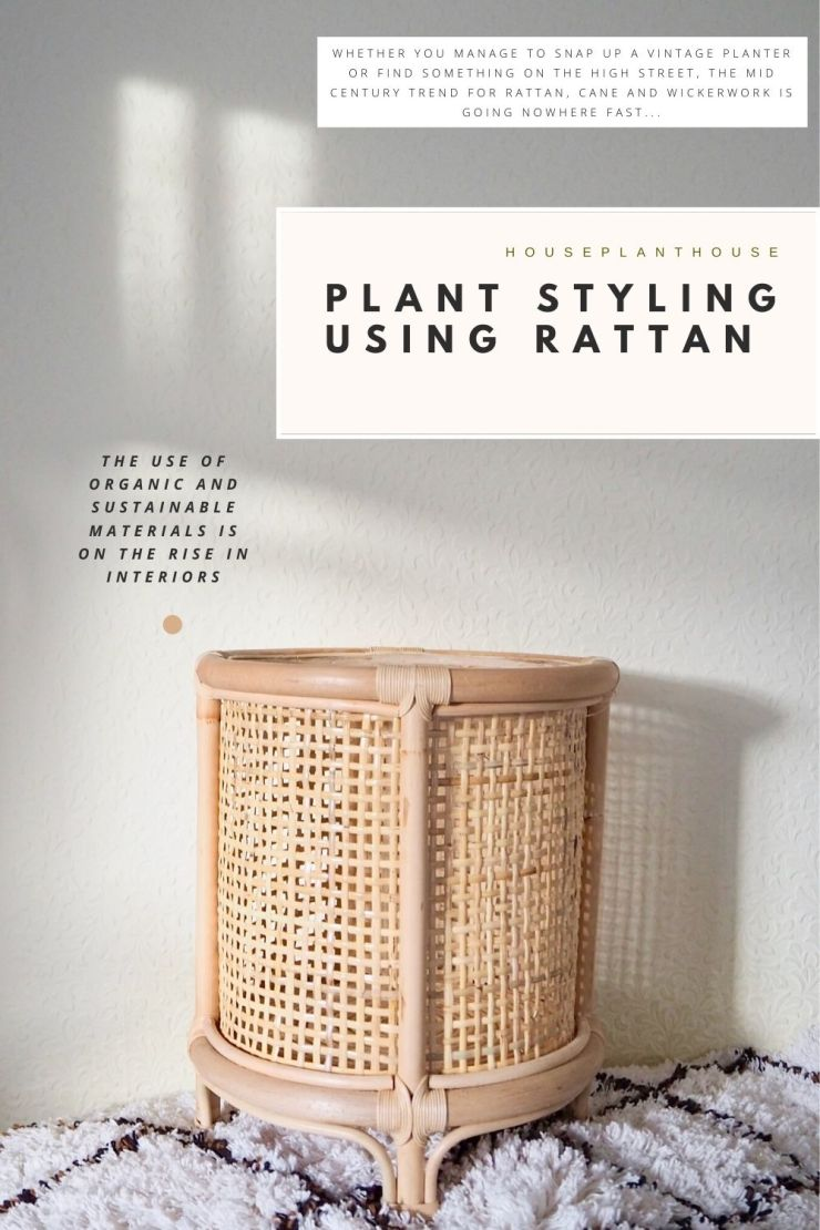 PLANT STYLING USING RATTAN