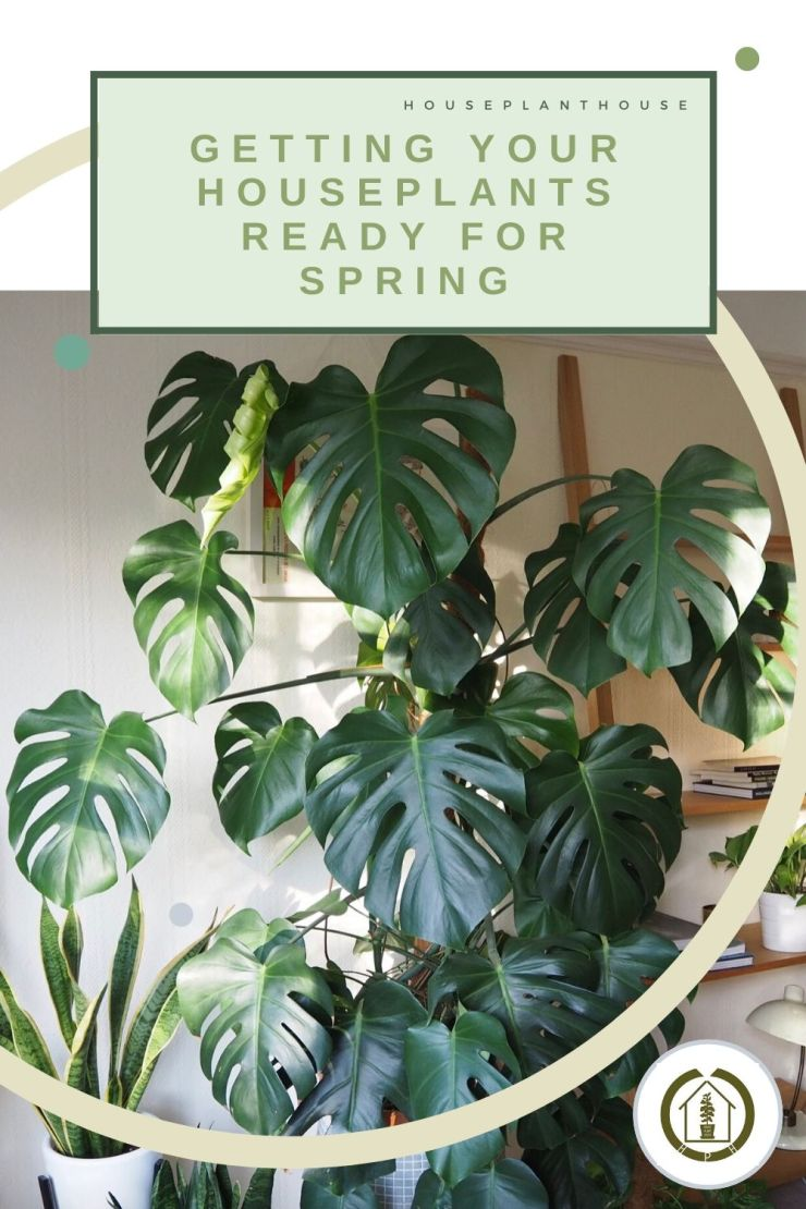 getting your houseplants ready for spring