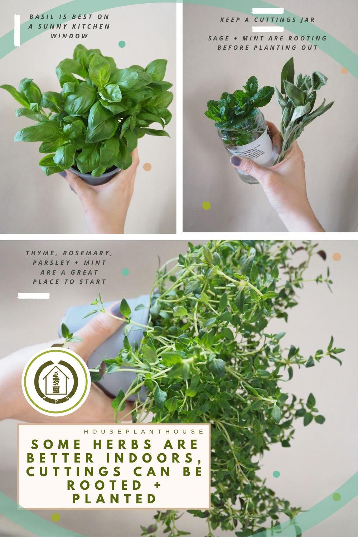 herbs 1 (1)