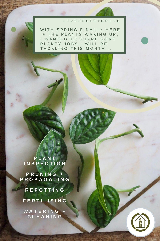 spring houseplants 2