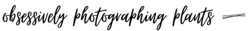 obsessivelyphotographingplants