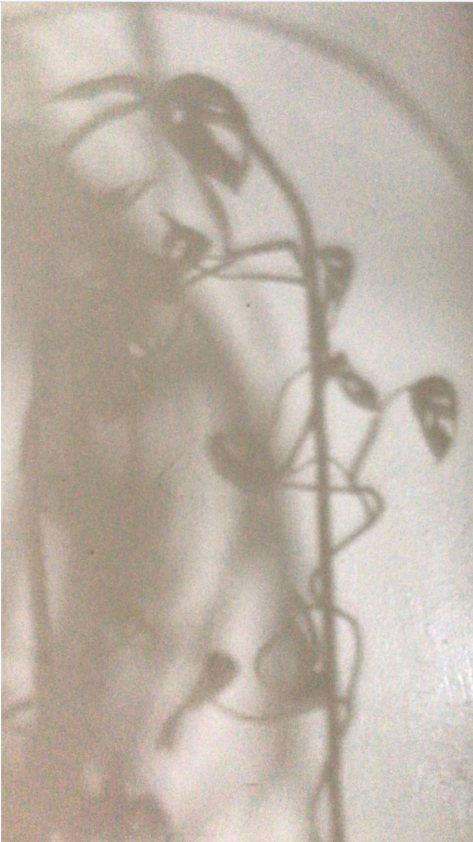 monstera shadow