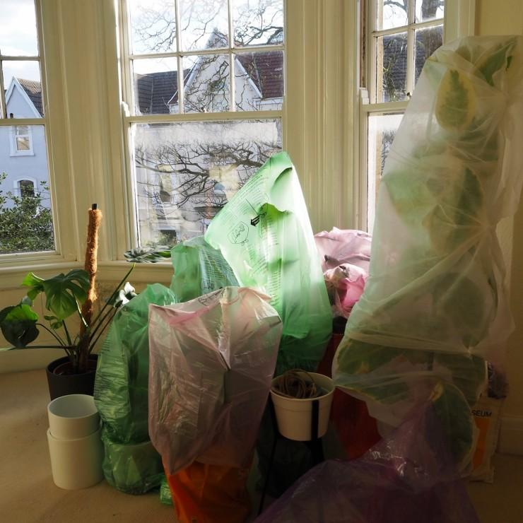 plant wrap corner1
