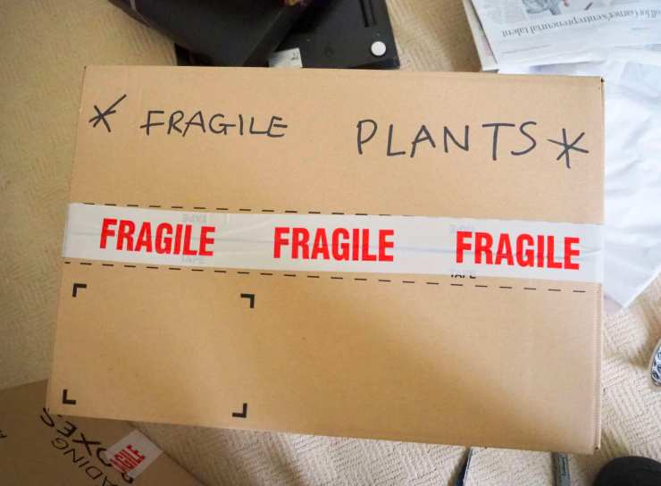 plantsbox1